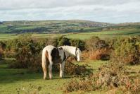 Further up the road, Bodmin Moor